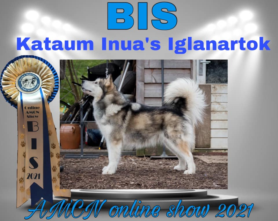 Kataum Inua's Iglanartok BOB BIS at Inua's Voice Alaskan Malamute Kennel