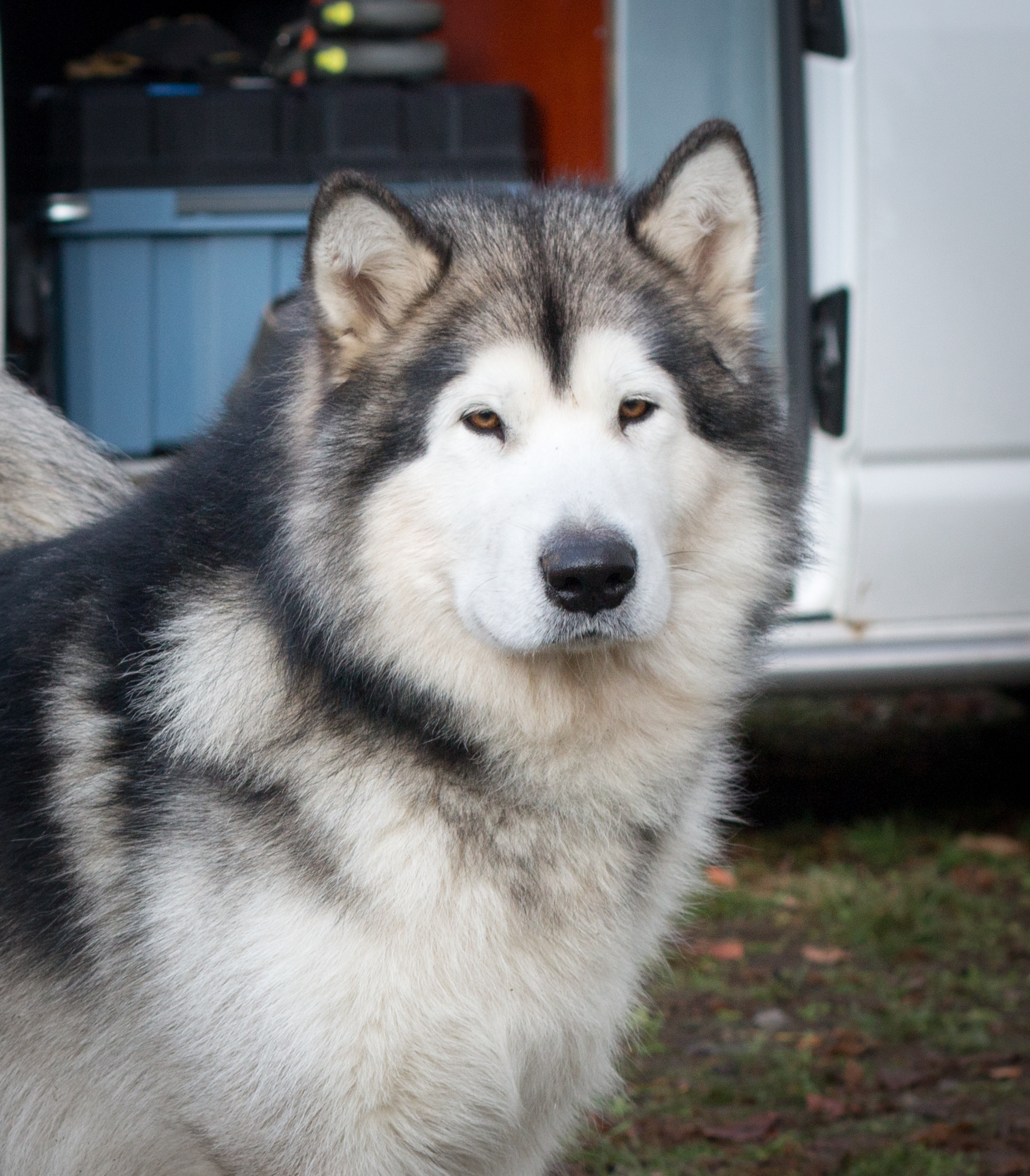 Jon Snow at Kennel Inua's Voice Whitewalker North O' The Wall