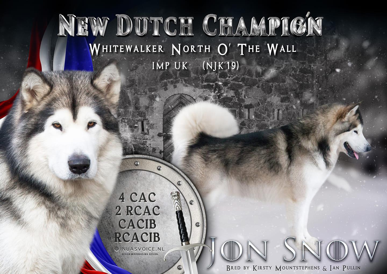 Alaskan Malamute Jon Snow at Inua's Voice Kennel