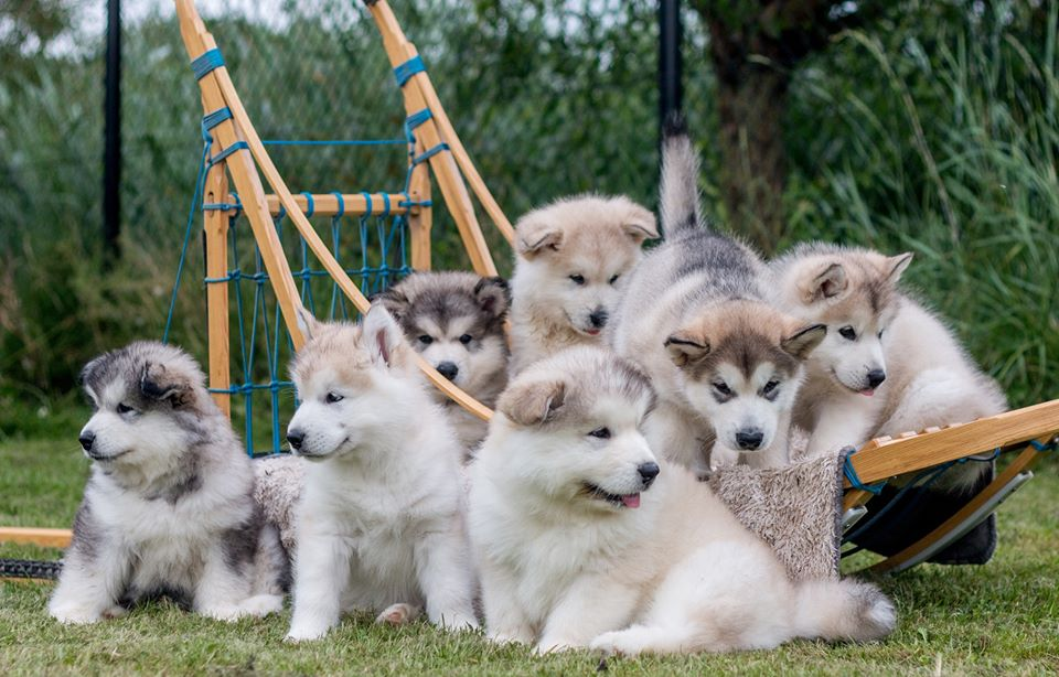 Inua's Voice Puppies Transformers
